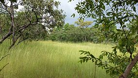 Comoé national park on the wayto Gaoui.jpg