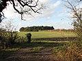 Copse in field - geograph.org.uk - 1061680.jpg