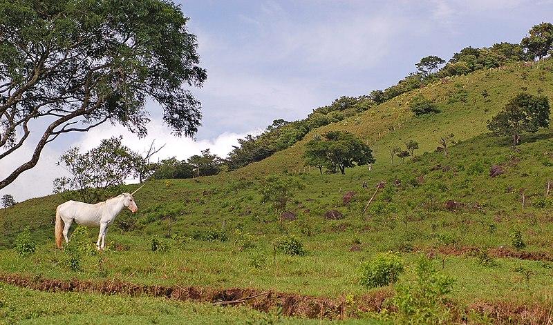 Costa Rica Unicorn 2800px.jpg