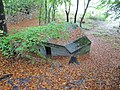 Covered in leaves - geograph.org.uk - 1567314.jpg
