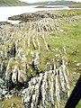 Craignish Peninsula, rock formation - geograph.org.uk - 93263.jpg
