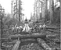 Crew with log skidway under construction and donkey engine in distance, Wynooche Timber Company, ca 1921 (KINSEY 977).jpeg