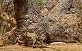 Crocuta crocuta (Hyaenidae) (49334324767).jpg
