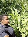 Crop cultivation with no pestsides.jpg
