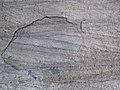 Cross-bedding in quartzite (Baraboo Quartzite, upper Paleoproterozoic, ~1.7 Ga; Tumbled Rocks Trail, Devil's Lake State Park, Wisconsin, USA) 3 (18193775504).jpg