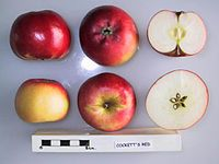 Cross section of Cockett's Red, National Fruit Collection (acc. 1930-040).jpg