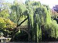 Crystal Springs Rhododendron Garden, Portland (2013) - 12.JPG