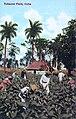 Cuba - In tobacco field.jpg