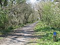 Cycle track along the old railway line from Truro to Newham - geograph.org.uk - 765825.jpg