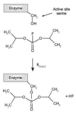 checkpoint kinase