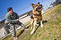DLA Troop Support subsistence supply chain gains K-9 customers 120307-F-JL266-197.jpg