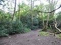 DSCN6216 Helensburgh Duchess Wood.jpg