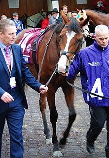 Anthony Van Dyck (horse) Irish-bred Thoroughbred racehorse