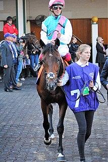 Expert Eye British-bred Thoroughbred racehorse