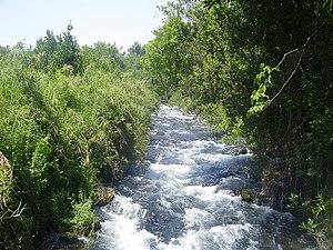 Dan River (Middle East) - Dan River in Tel Dan Nature Reserve