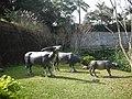 Daping Village,Longtan - panoramio.jpg