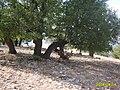 Dare hezar salan (peye wilede) - panoramio.jpg