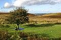 Dartmoor-14-Baum-2004-gje.jpg