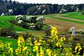 Das Wachbachtal, im Frühling besonders schön.jpg