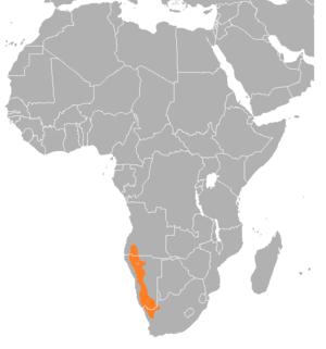Dassie rat - Image: Dassierot Suider Afrika