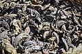 Dead organisms Bohicon-Abomey.jpg