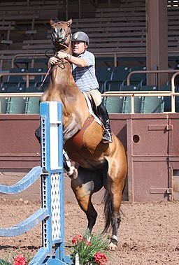 Dealing with a rearing jumper