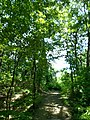 Decker ave to Fire Tower to Grey Run davis farm - panoramio (9).jpg