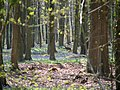 Deer in Parnholt Wood - geograph.org.uk - 1609844.jpg