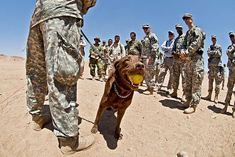 Dog training - Positive reinforcement can involve a game or toy, such as this tennis ball.