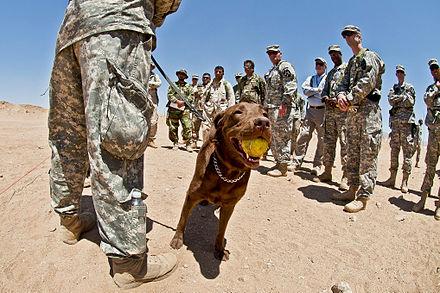 Image Result For Skinner Dog Training