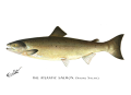 Denton Atlantic Salmon 1896.png