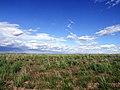 Desert Floor - panoramio.jpg
