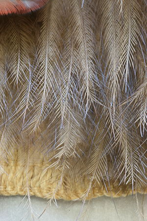 Māori traditional textiles - Detail of the bottom edge of a kahu kiwi, showing the distinctive hair-like nature of the kiwi feathers.