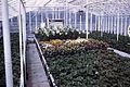 Dicksons Florist greenhouse beds 01.jpg