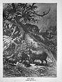 Die Gartenlaube (1891) 521.jpg