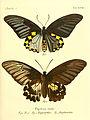 Die ausländischen Schmetterlinge in Abbildungen nach der Natur (Tab. XVIII) (6012537366).jpg