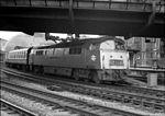 """Diesels - Class 52 D1005 """"Western Venturer"""" (15014747523).jpg"""