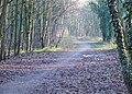 Dismantled Railway through Woodland, Himley, Staffordshire - geograph.org.uk - 633962.jpg
