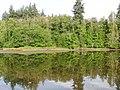 Dogfish Bay - panoramio.jpg
