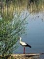 Dojran Lake 263.jpg