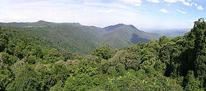 Dorrigo National Park - View from the Skywalk, Dorrigo National Park