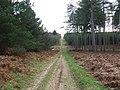 Downhill track - geograph.org.uk - 670541.jpg