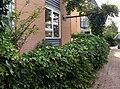 E.V.A. Lanxmeer vegetalEnclosure 2009.jpg