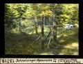 ETH-BIB-Schneisingen, Alpenrosen, von Südwest-Dia 247-13719.tif