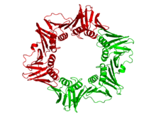 Crystallographic structure of the dimeric dna polymerase beta subunit