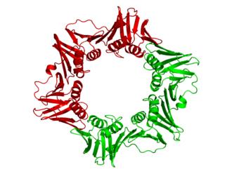 DNA clamp - Image: E coli beta clamp 1MMI