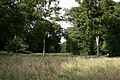 Earls Wood - geograph.org.uk - 502014.jpg