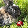 Easterbunny 2.jpg