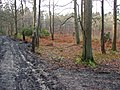 Edgbarrow Woods nature reserve.jpg