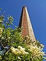 Elderflowers and chimney stack - geograph.org.uk - 847455.jpg